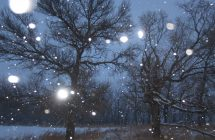 Trees with falling snow